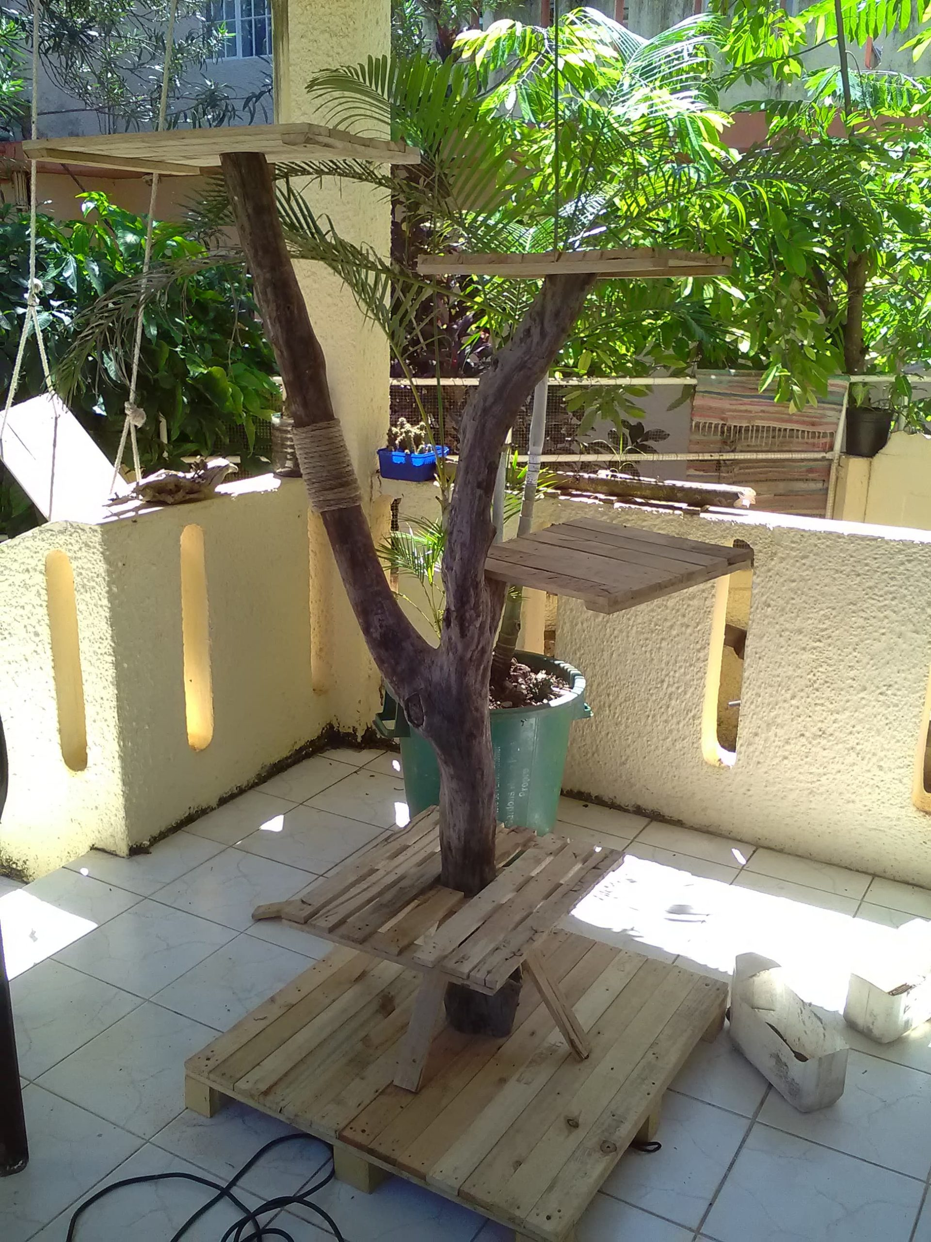 You are currently viewing Arbre à chat